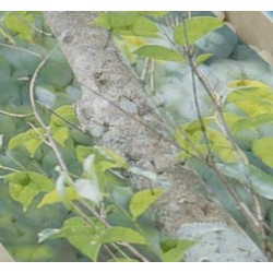 Kadidlo Santalové dřevo 30g
