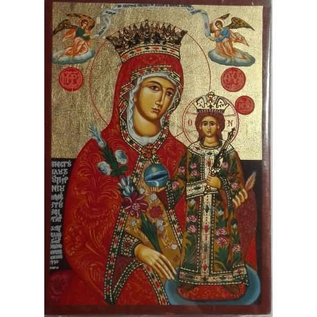 Panna Maria růže (Amaranto)