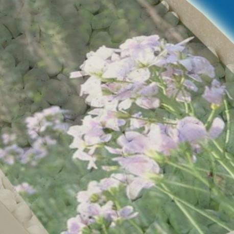 Kadidlo Lesní květina